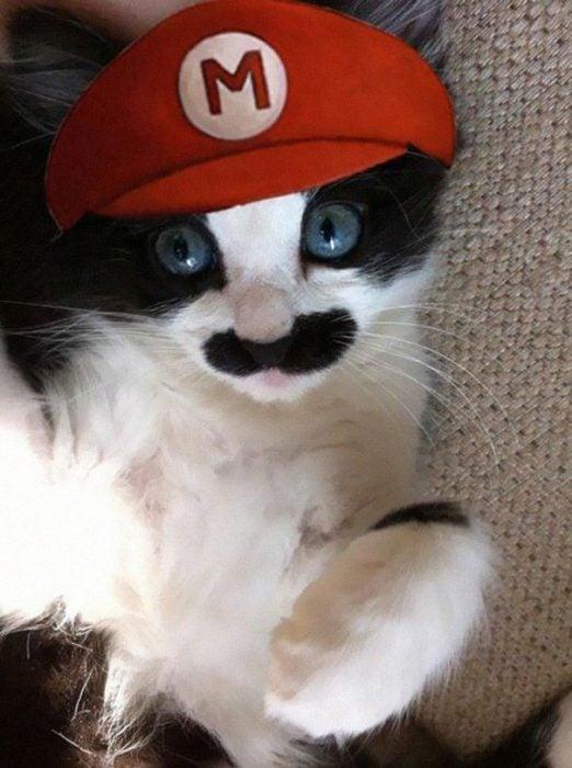 boredpanda-com-halloween-cat-costumes-22-57f75fe81c8ba__605