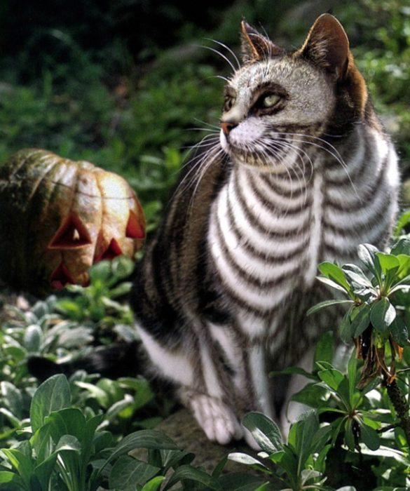 boredpanda-com-halloween-cat-costumes-52-57f785afe5c64__605