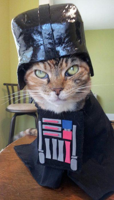 catscatscatsplusonedog-com-darthmittens