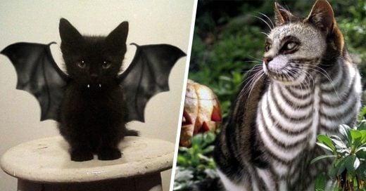 15 terroríficos disfraces de Halloween para tu gato