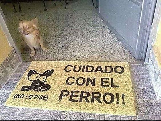 Perro en la puerta de su casa.