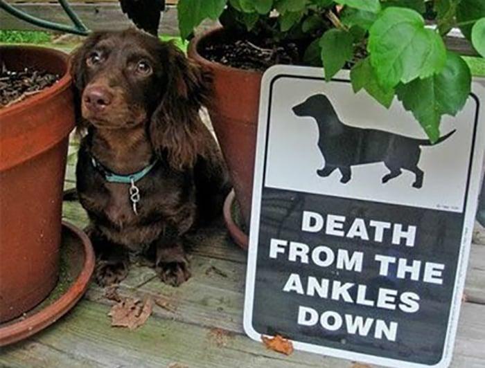 Perro escondido entre dos macetas.