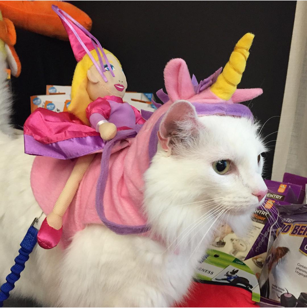 google-com-mx-1442611154-cat-unicorn