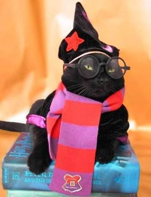 google-com-mx-harry-potter-cat-halloween-costume-jpg