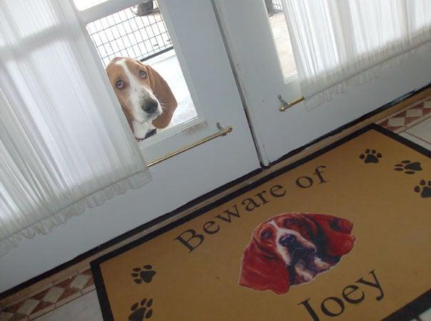Perro asomado por la puerta de la casa.