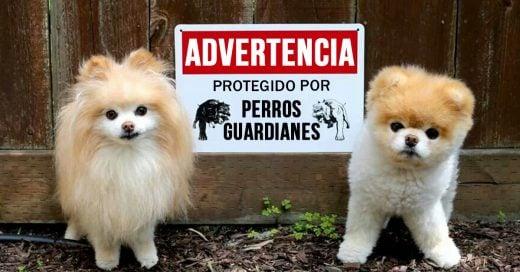 15 perros guardianes que te robarán el corazón
