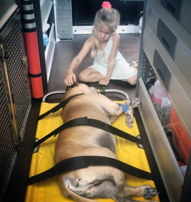 Jaden en la camilla rumbo al hospital veterinario.