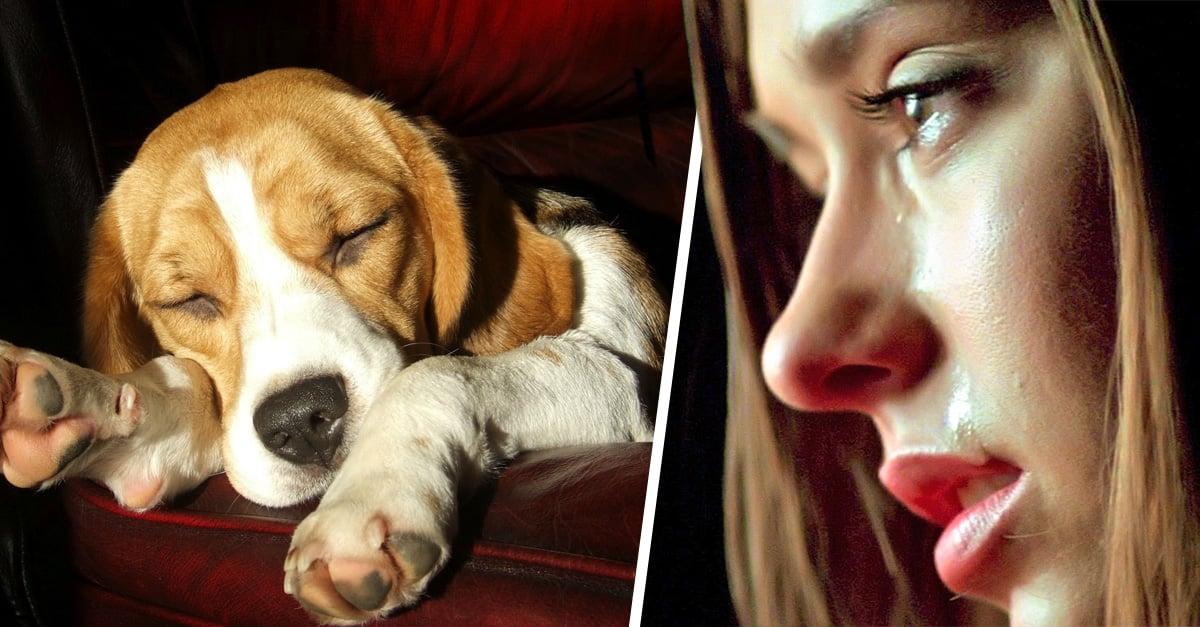 Quieres saber qué sueñan los perros mientras duermen, la respuesta ha conmovido al mundo