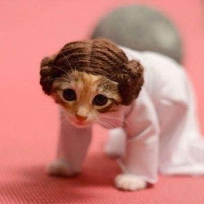 p2-trrsf-com-piensopet-blog-animal-disfraz-gato-guerra-galaxias