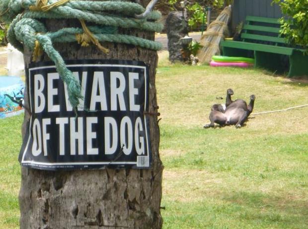 Perro recostado en el pasto.