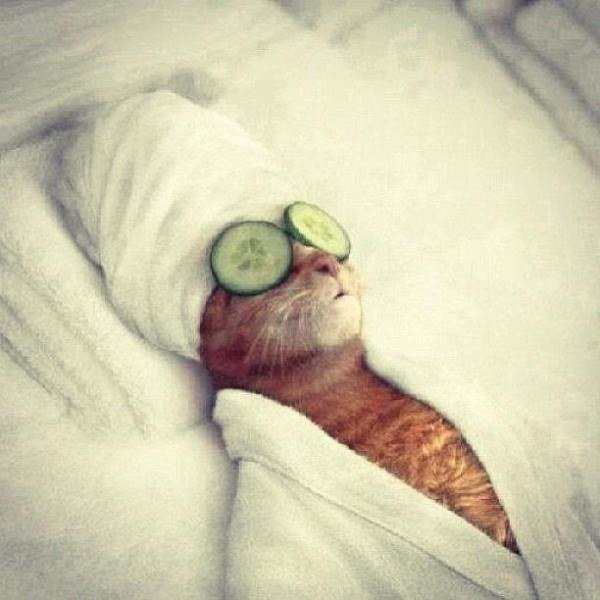 Gato recostado con unos pepinos en los ojos.