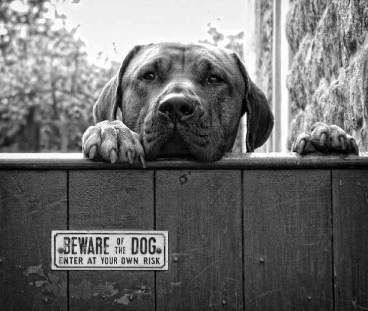 Perro con mirada triste asomándose para la calle.