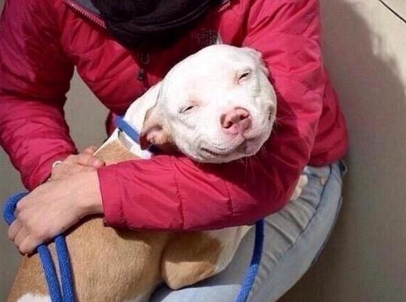Perro sonriendo.