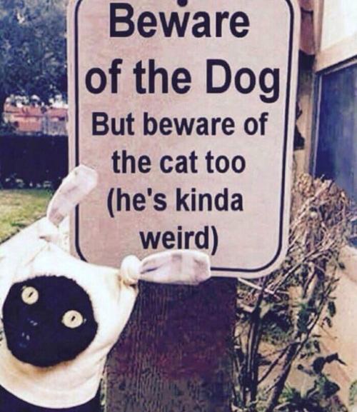 Gato con una especie de gorro.