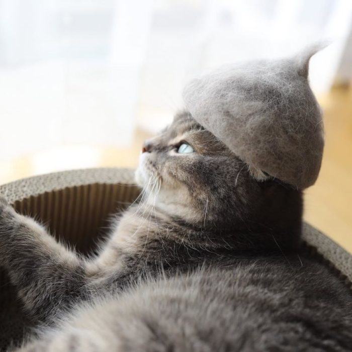 gray cat with gray fur hat