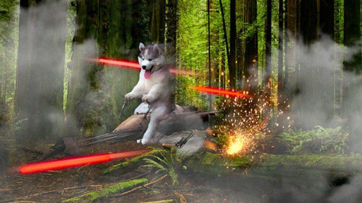perro sobre nave de star wars