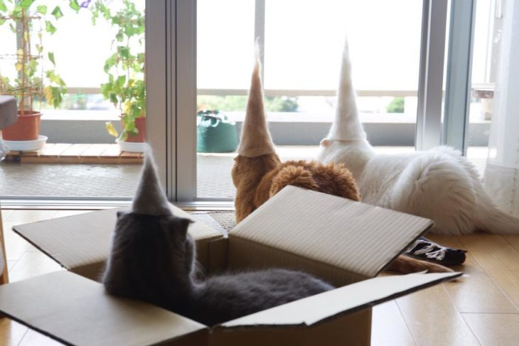 These cats wear hats made from their fur