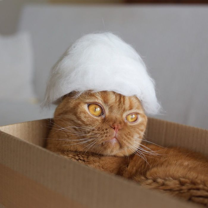 gato naranja con sombrero blanco