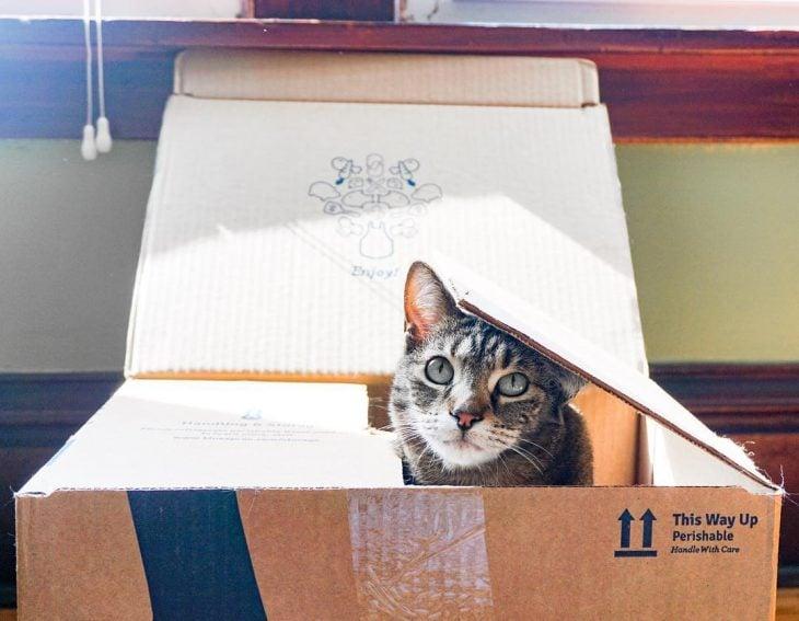 15 cosas extrañas que toda dueña de gatos conoce perfectamente