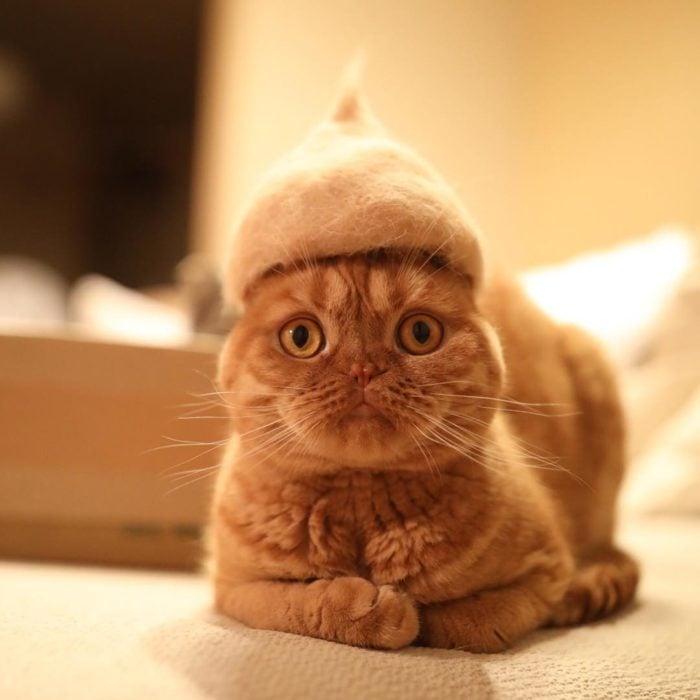 gato naranja con sombrero de pelo