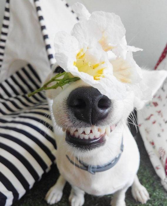 Perro con una flor en la cabeza.