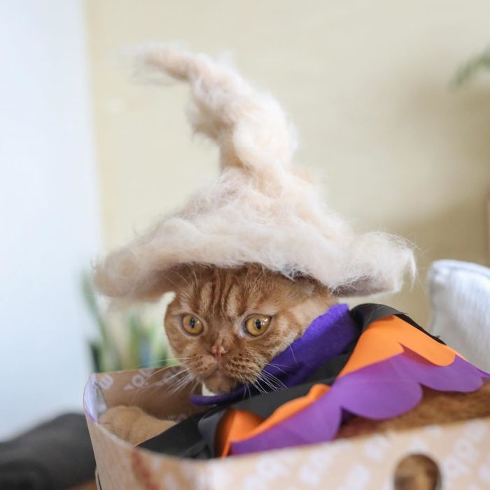 orange cat with hat hair