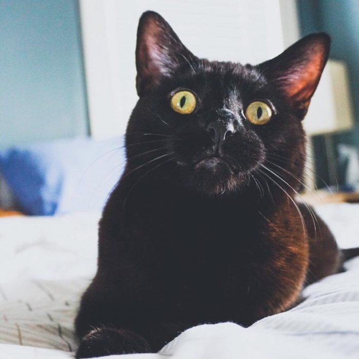 gato negro serio