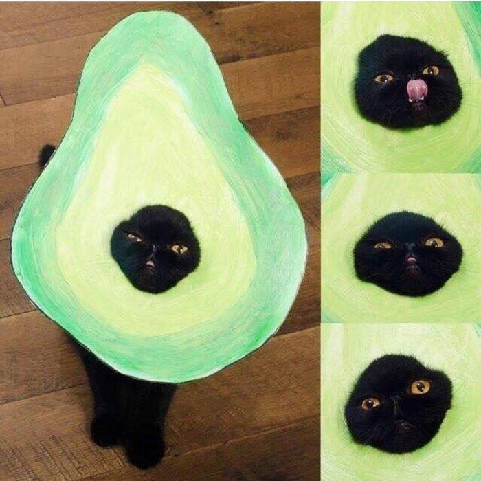 gato con disfraz de aguacate