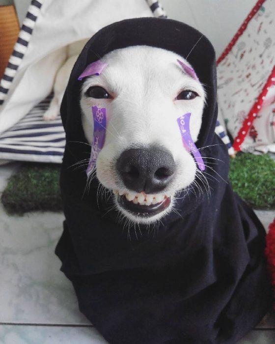 Perro disfrazado.