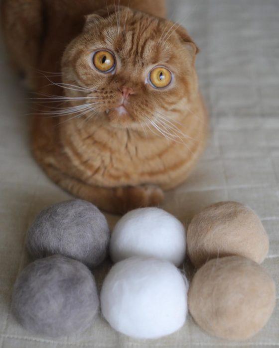gato naranja con sombreros de pelaje