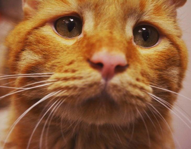 orange cat with sad look
