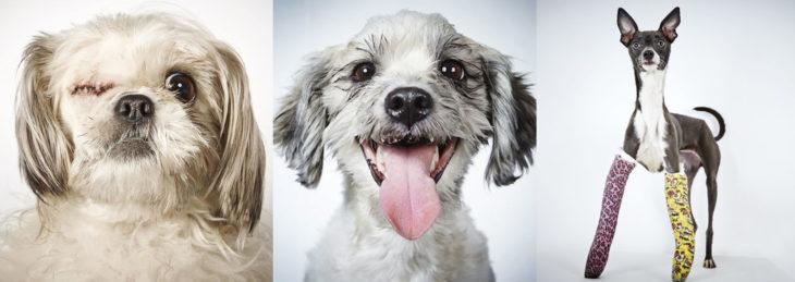 Fotógrafo capturo perros sin hogar
