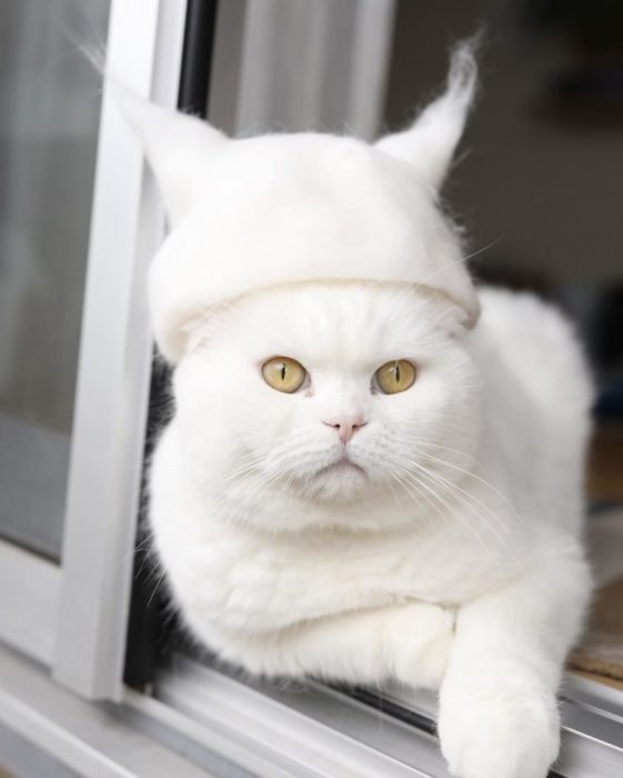 white cat with white cap