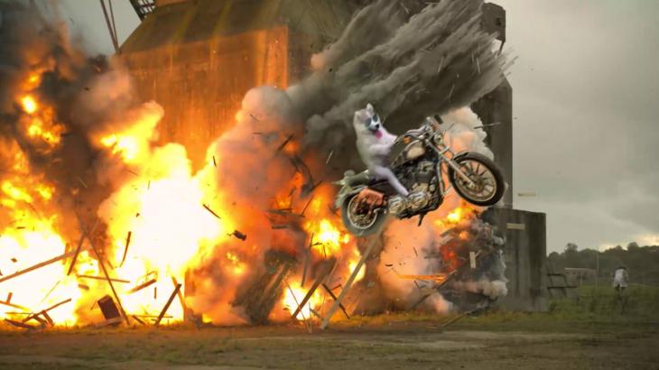 perro sobre motocicleta en explosión