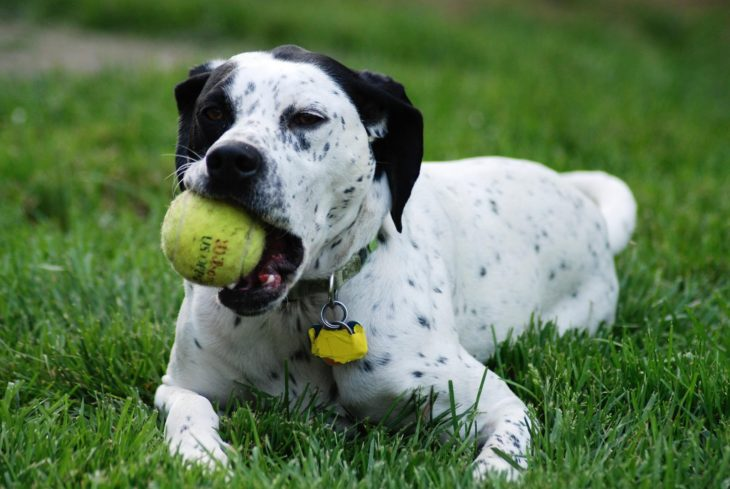 dog playing