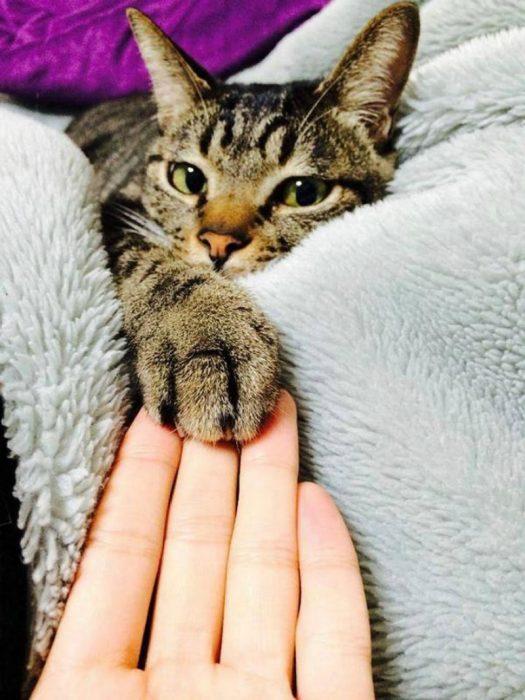 mano con garra de gato