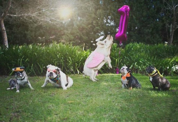 costumed dogs and pork jumping