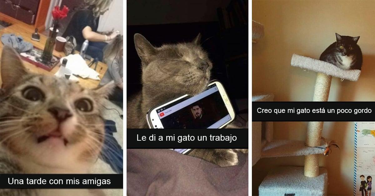 25 divertidos snapchats de gatos con los que maullarás de risa