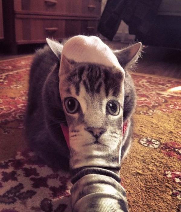 Gato calcetín