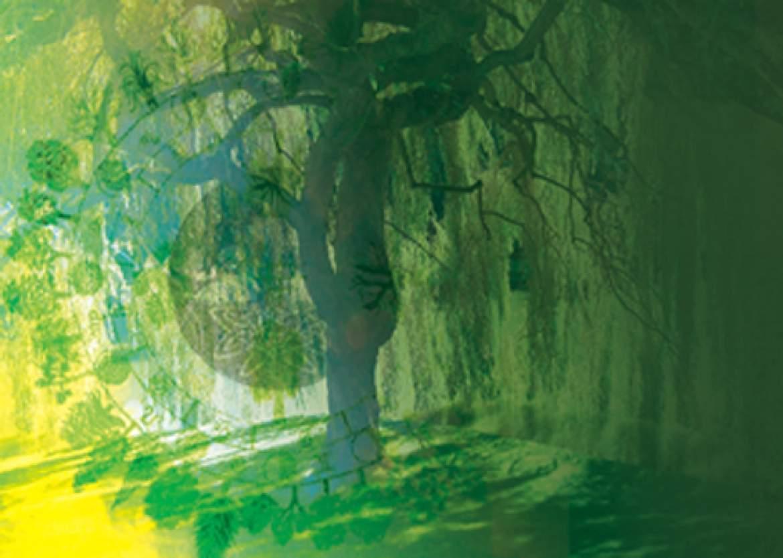 Horóscopos Celtas basado en árboles que te protegen