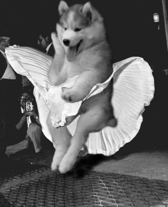 perro con vestido blanco y aire