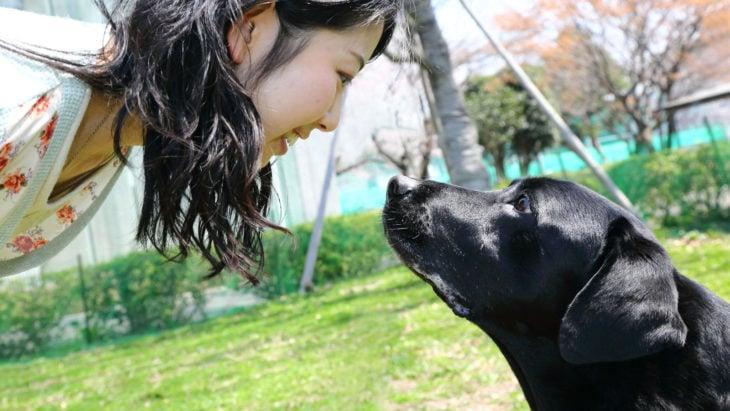 Mirar al perro