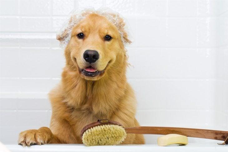 Perro bañado