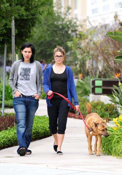 Perro de paseo