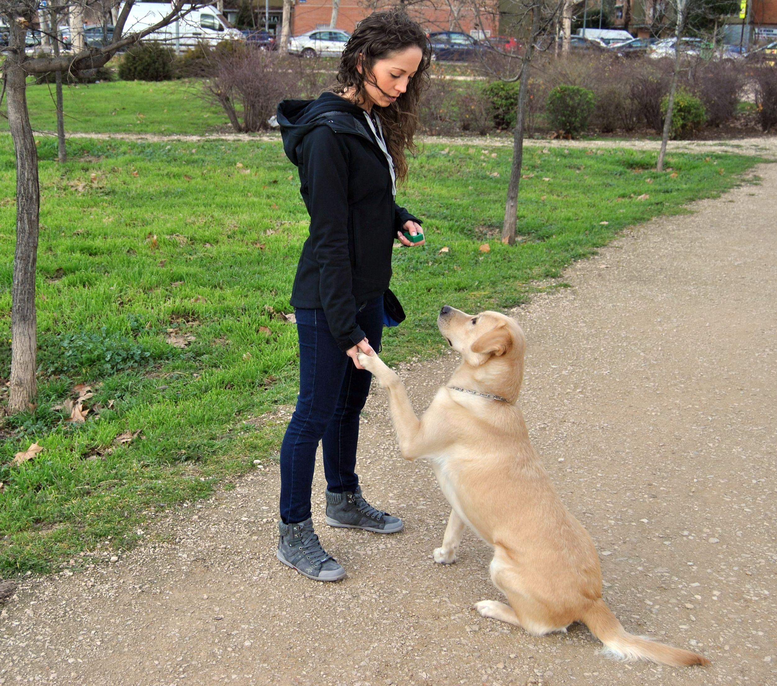 Resultado de imagen para reglas claras para perros