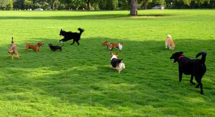 Perros sociales