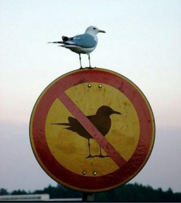 Contra la ley