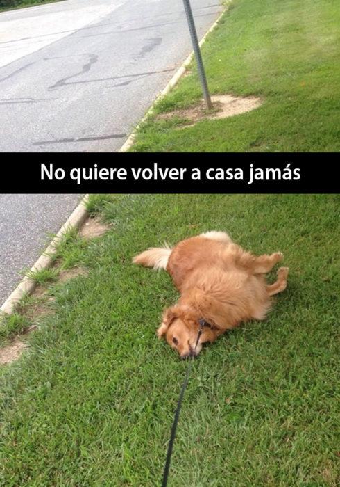 Snapchat de un perro recostado en el pasto