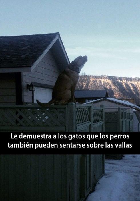 Snapchat de un perro aullando mientras está senstado en una valla