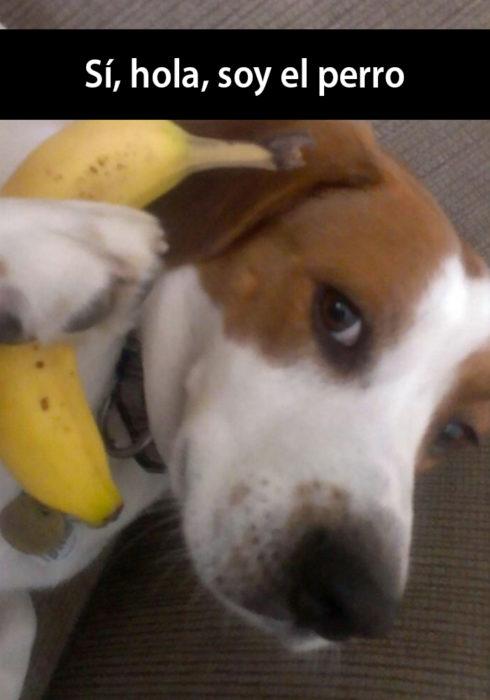 Snapchat de un perro hablando con una banana